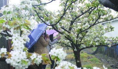 비 꽃의 배 트리 힐은 에이커
